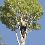 demontage arbre